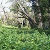 0206_Lemosho Glades