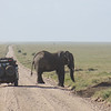 1206_land cruiser and elephant