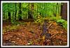 Autumn Forest-10-01-02cr