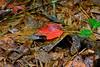 Autumn Leaf-10-01-04