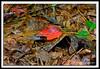 Autumn Leaf-10-01-04cr