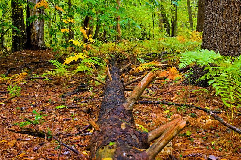 Autumn Forest-10-01-01