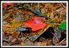 Autumn Leaf-10-01-04acr
