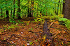Autumn Forest-10-01-02