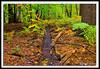 Autumn Forest-10-01-01cr