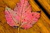 Autumn Leaf-10-01-02