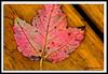 Autumn Leaf-10-01-02cr