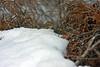 Chipmunk at Bellamy River Wildlife Sanctuary