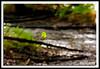 Falling Leaf-08-22-01cr