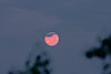 Full Moon over Bellamy River Wildlife Sanctuary just before sunrise