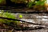 Falling Leaf-08-22-01