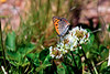 Butterfly-05-31-03a