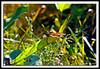 Monarch Butterfly-08-09-01cr