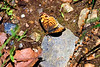 Butterfly-05-31-01a