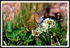 Butterfly-05-31-03acr