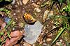 Butterfly-05-31-01