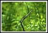 Dragonfly-05-31-01cr