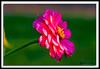 Flower-08-30-10acr