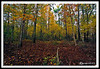 Autumn Forest at Great Bay National Wildlife Refuge
