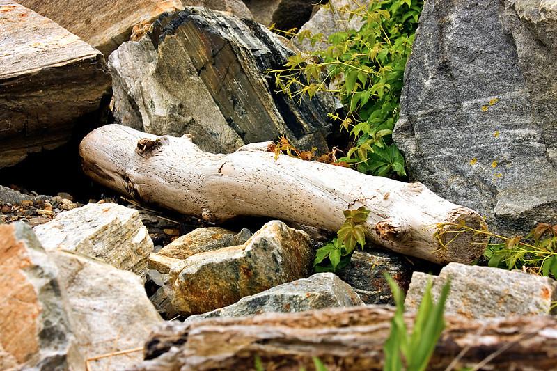 Driftwood-06-14-01