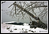 Frosty Branch at The Great Island Common