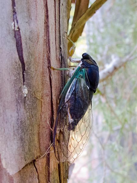 """Last cicada of the summer"""