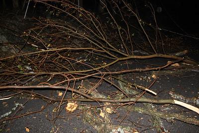 Tree Down, Elizabeth Street, Mountain Ave, Tamaqua (4-27-2011)