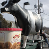 Large Cow, Turkey Hill, Hometown (2-19-2011) :