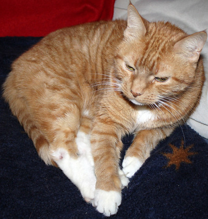 My 20 Year Old Cat, Lucky, Tamaqua (1-31-2011)