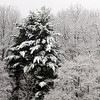 Snow Photos, Ryan Fannock, Tamaqua (3-23-2011) :
