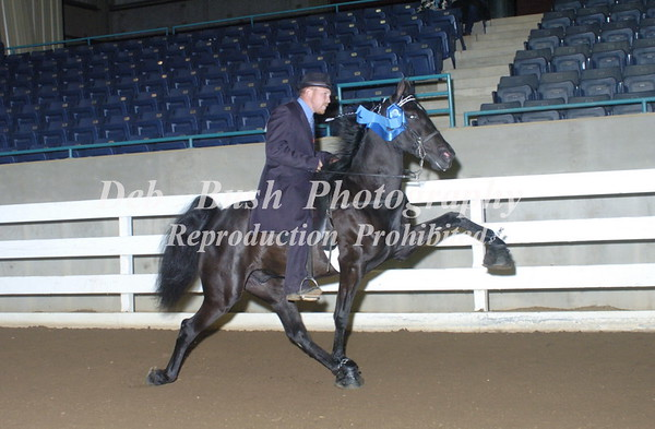 CLASS 17  TWO YR OLD OPEN MARES & GELDINGS  RC