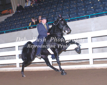 CLASS 5  TWO YR OLD OPEN STALLIONS  RC
