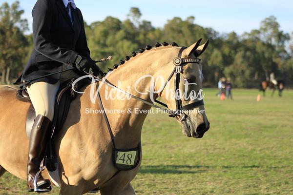 Lilydale Road Showhorse & Council Classic - 29.5.2011