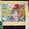 Judge's Recognition<br /> Window Garden<br /> Tammy Zinkosky
