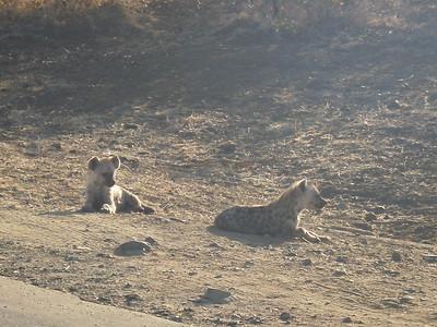 Hyenas at Kruger