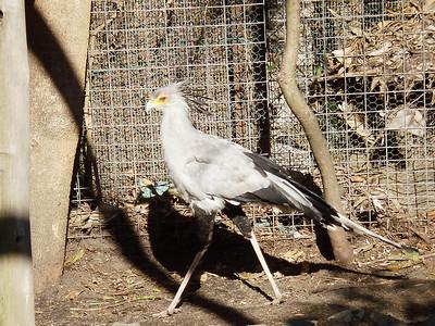 Secretary Bird at World of Birds