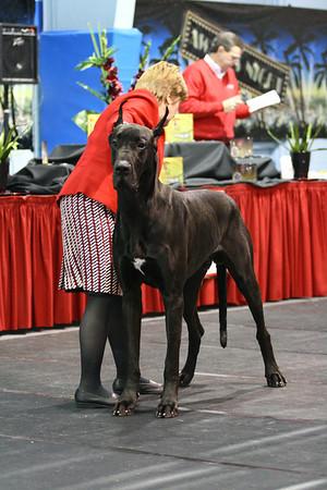 Open Black Dogs