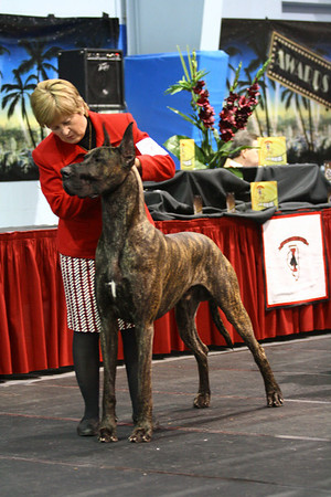 Open Brindle Dogs