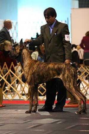 12-15 Mo Dog