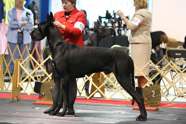 Open Black Dog