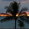 Sunset Through a Palm