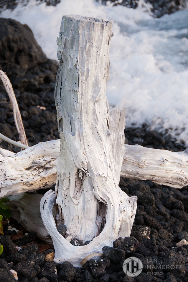 Driftwood in A'Bay