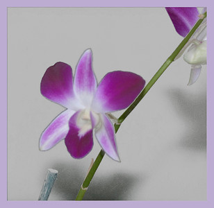 2012-07-30 - Orchid