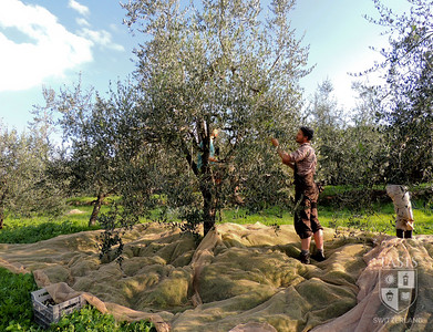 Ethical Foods - Italy