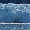 Margerie vs ODC Glacier Bay NP-4412.jpg