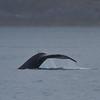 Alaska Trip 2012-4245.jpg