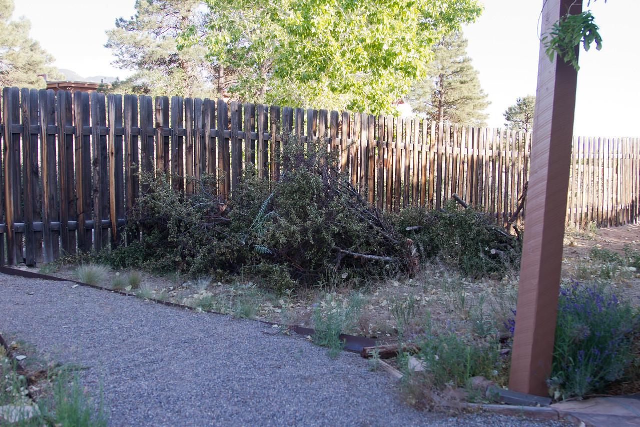 Erik's pyrocanthia plunder pile