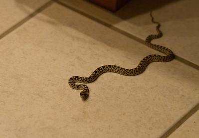 Snake intruder!