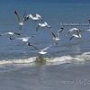 20110111 1242 D'Urville views _MG_6120 WM