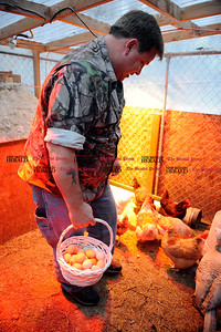 3/2/2012 Mike Orazzi  | Staff Danny Spisak collects eggs laid by his chickens and turkeys at his Plainville home. Spisak's chicken Maggie laid what he thought might be the world's smallest egg. However, the Guinness folks said it wasn't.